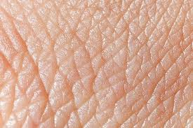 دانلود تحقیق پوست